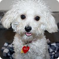 Adopt A Pet :: Carla - Yorba Linda, CA