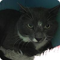 Adopt A Pet :: Stash - Orleans, VT