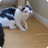 Adopt A Pet :: Chaplin 32103286 - Westampton, NJ