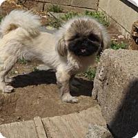 Adopt A Pet :: Lance - Zaleski, OH