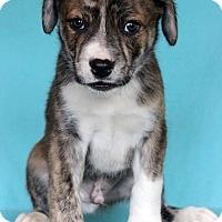 Adopt A Pet :: Raymond - Waldorf, MD
