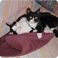 Adopt A Pet :: Rodney & Ollie - San Ramon, CA