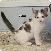 Adopt A Pet :: Paul - Dover, OH
