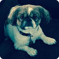 Adopt A Pet :: Cobi - Orlando, FL