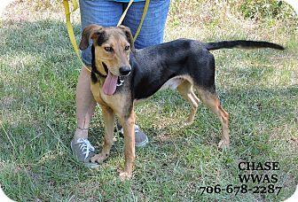 Hound (Unknown Type) Mix Dog for adoption in Washington, Georgia - Chase