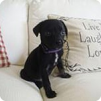 Adopt A Pet :: Harvey - Marlton, NJ
