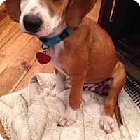Adopt A Pet :: Clyde - Marlton, NJ