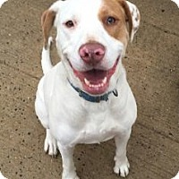 Adopt A Pet :: Angel - Pembroke, GA