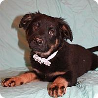 Adopt A Pet :: Cato - Albany, NY