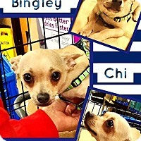 Adopt A Pet :: Mr. Bingley - Bogalusa, LA