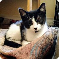 Adopt A Pet :: Spot - Dallas, TX