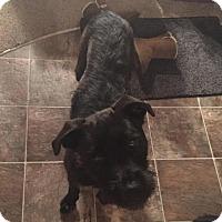 Adopt A Pet :: Pauly - Racine, WI