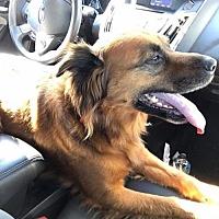 Adopt A Pet :: UTAH - Napa, CA