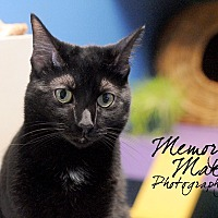 Adopt A Pet :: Guppy - Topeka, KS