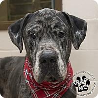 Adopt A Pet :: Apollo - Troy, OH