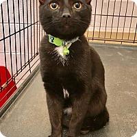 Adopt A Pet :: Gavin - Northeast, OH