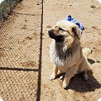 Adopt A Pet :: Chip - California City, CA