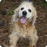 Adopt A Pet :: Blondie - Meridian, MS