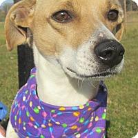Adopt A Pet :: Abby - Menomonie, WI