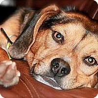 Adopt A Pet :: Seven - Hastings, NY