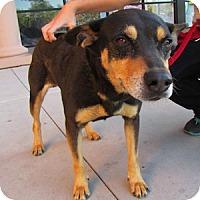 Adopt A Pet :: Sandi - Gilbert, AZ