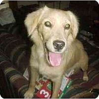 Adopt A Pet :: Marcia's Puppy - Scottsdale, AZ