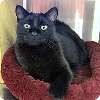 Adopt A Pet :: Carmen - Roseville, MN