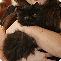 Adopt A Pet :: Ethel - Beverly Hills, CA