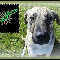 Adopt A Pet :: Johnston - Missouri City, TX