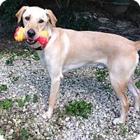 Adopt A Pet :: Malarkey - House Springs, MO