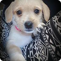 Adopt A Pet :: Neela - Gig Harbor, WA