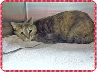 Domestic Shorthair Cat for adoption in Marietta, Georgia - MISTY