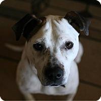 Adopt A Pet :: T - Springfield, MO