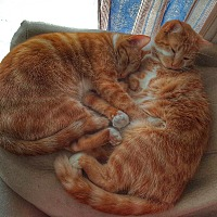 Adopt A Pet :: Ms Ginger & Ms Oats - Germantown, MD