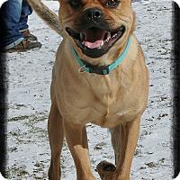 Adopt A Pet :: Clyde - Shippenville, PA