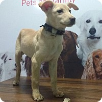 Adopt A Pet :: Snowy - Monroe, NJ
