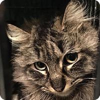 Adopt A Pet :: Madeline - East Brunswick, NJ