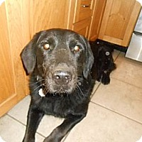 Adopt A Pet :: Buddy - North Jackson, OH