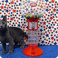 Adopt A Pet :: Catiana - Orlando, FL
