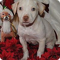 Adopt A Pet :: John - Costa Mesa, CA