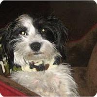 Adopt A Pet :: CASH - Scottsdale, AZ