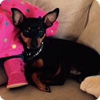Adopt A Pet :: Onyx (Courtesy Listing) - Malaga, NJ
