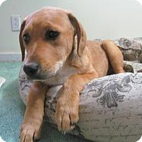 Adopt A Pet :: Rubin - Ball Ground, GA
