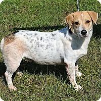 Adopt A Pet :: OPAL - New Iberia, LA