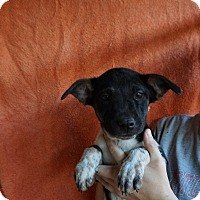 Adopt A Pet :: Lizzy - Oviedo, FL