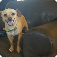 Adopt A Pet :: Summer Tyme - Vacaville, CA