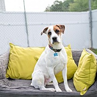 Adopt A Pet :: Charlie - Charlotte, NC