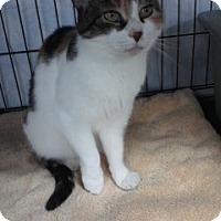 Adopt A Pet :: Maysie - Jenkintown, PA