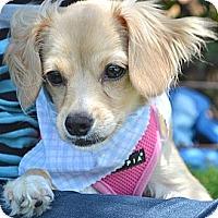 Adopt A Pet :: Clyde - Los Angeles, CA
