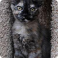Adopt A Pet :: Lola - Palmdale, CA